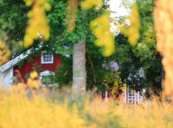 maison ecologique economique