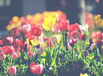 idees deco jardin exterieur